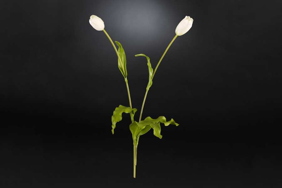 Floral compositions TULIP 3D Models