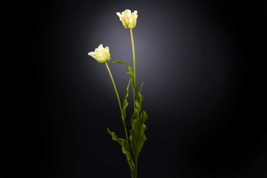 Floral compositions TULIP PAPPAGALLO 3D Models